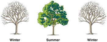 The fertility cycle represented by the seasons of a tree: winter - summer winter.