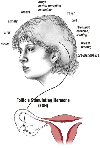 Production of the Folicle Stimulating Hormone can be affected by many factors, such as: stress, grief, anxiety, illness, drugs, herbal remedies, medicines, travel, diet, strenuous exercise, breast feeding, pre-menopause.
